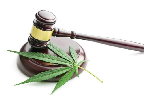 the cannabis leaf and judge gavel